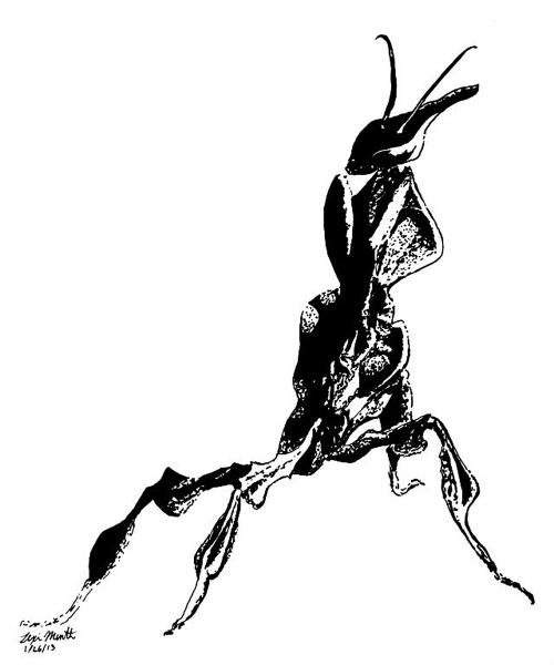 Lexi Menth, Preying Mantis, drawing