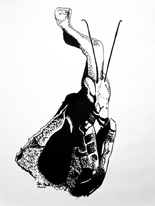 Lexi Menth, Ghost Mantis, drawing